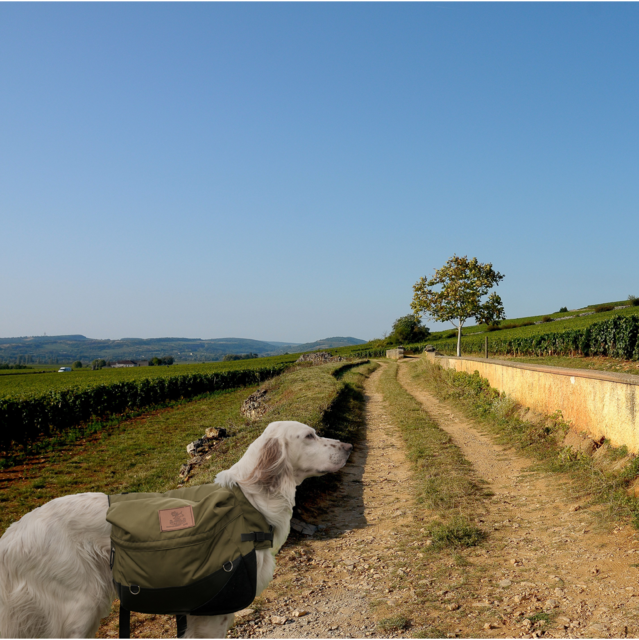 Des vacances dog friendly en Bourgogne
