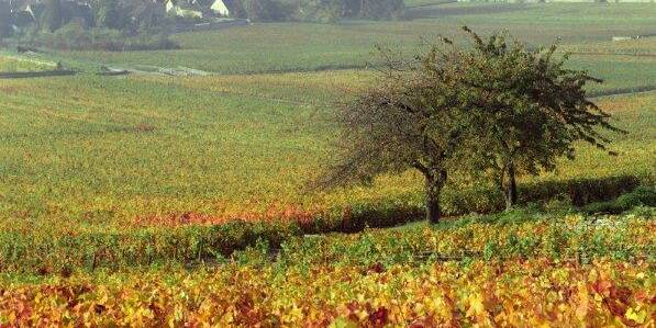 Vignes en automne © Atelier photo Muzard